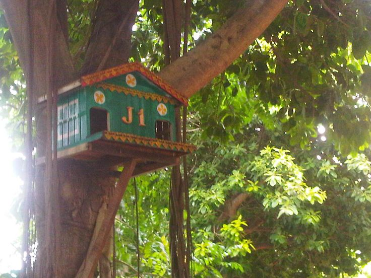 Our pigeon house and Home Address
