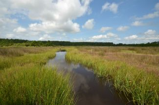This restored marsh was once a farm growing corn and soy. Now it is a carbon sink. North River Farms is one of the N.C. Coastal Federation's wetland restoration projects. Photo: Tess Malijenovsky