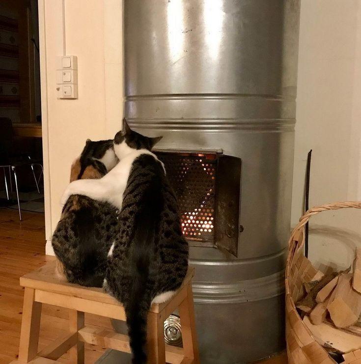 Приколы про кошек картинки новые, татьяны