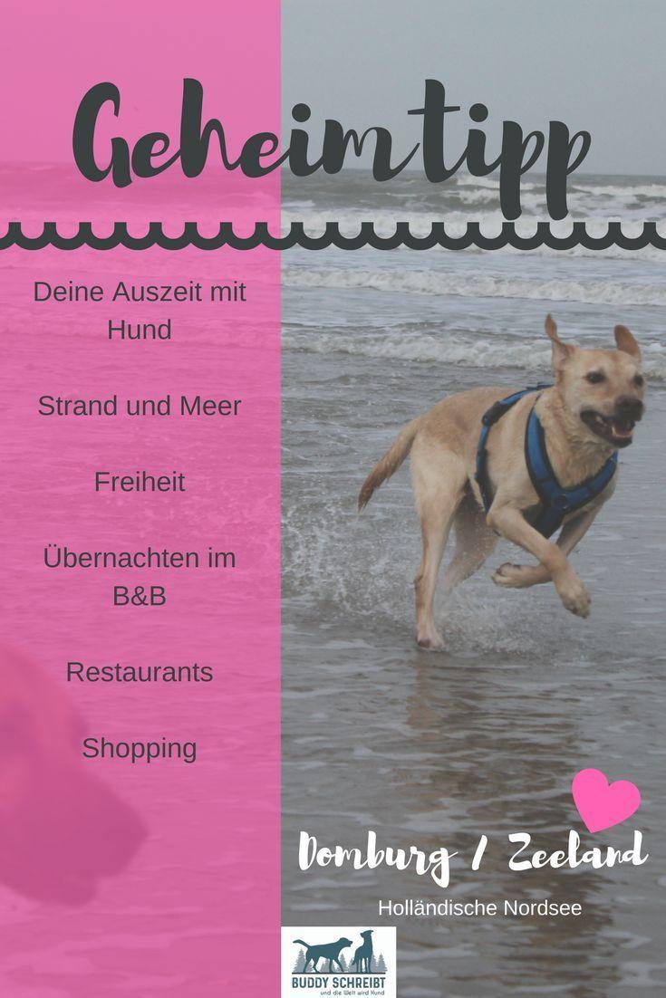 Geniessen Oder Auszeit Mit Hund An Der Hollandischen Nordseekuste Urlaub Mit Hund Nordsee Hund Reisen Urlaub Mit Hund Holland