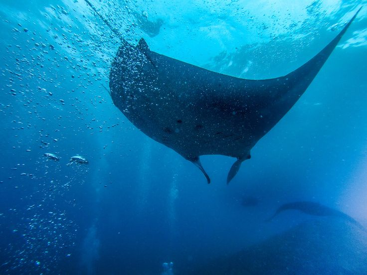 A magical dive with manta rays in Nusa Lembongan, Indonesia