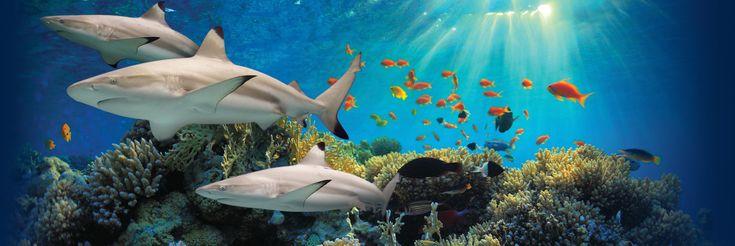 The live webcam for the Baltimore National Aquarium Blacktip Reef exhibit, a.k.a. the best desktop background EVER!!