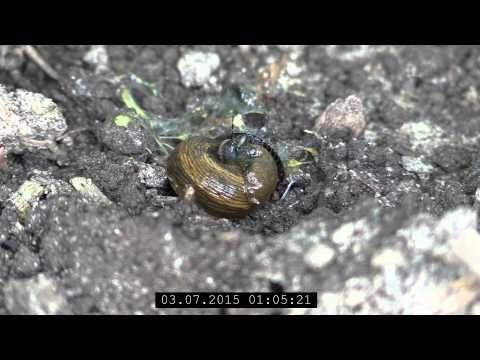Awesome Schneckenplage vorbeugen Ein Insektenfreundlicher Garten