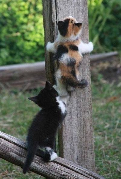 A helping hand……….how adorable!
