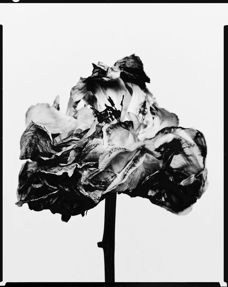 decaying flower was shot by billy kidd