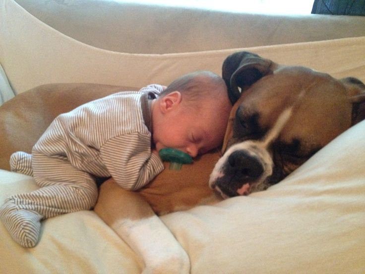Boxers are such great dogs!! He loves his little buddy so much!