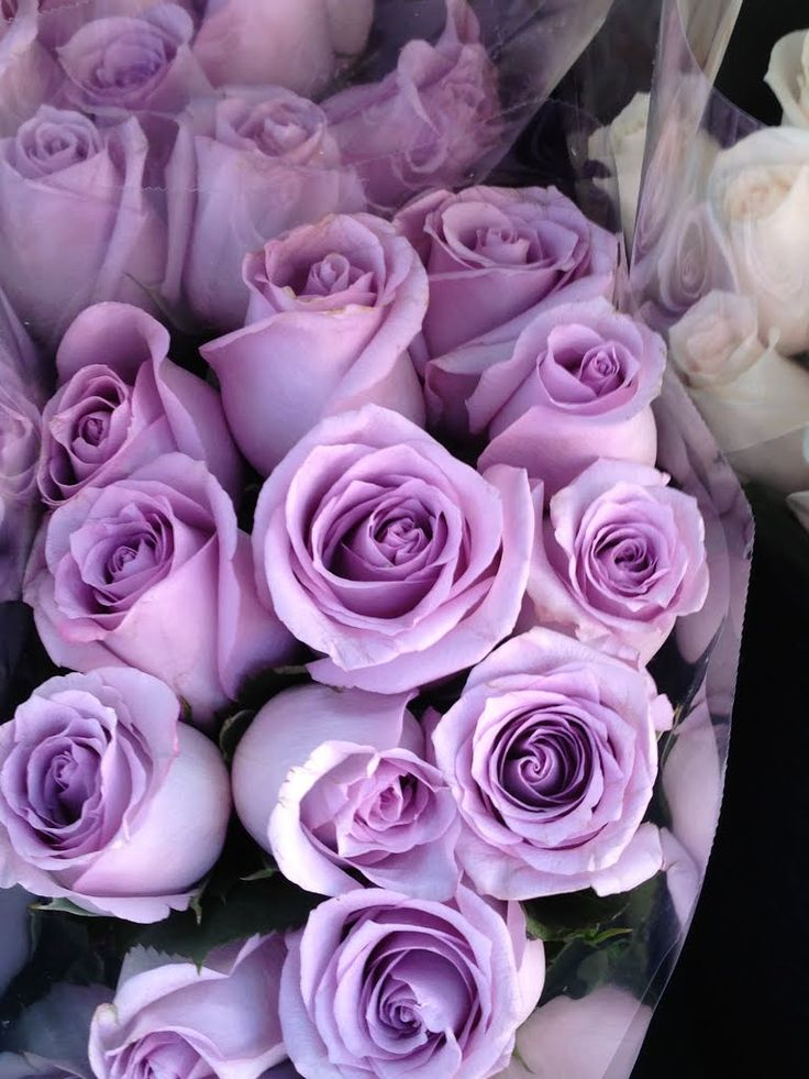 Lavendar Roses   Memory Of Rose Marie Kirby     I Love And Miss You Momma  Very Much!