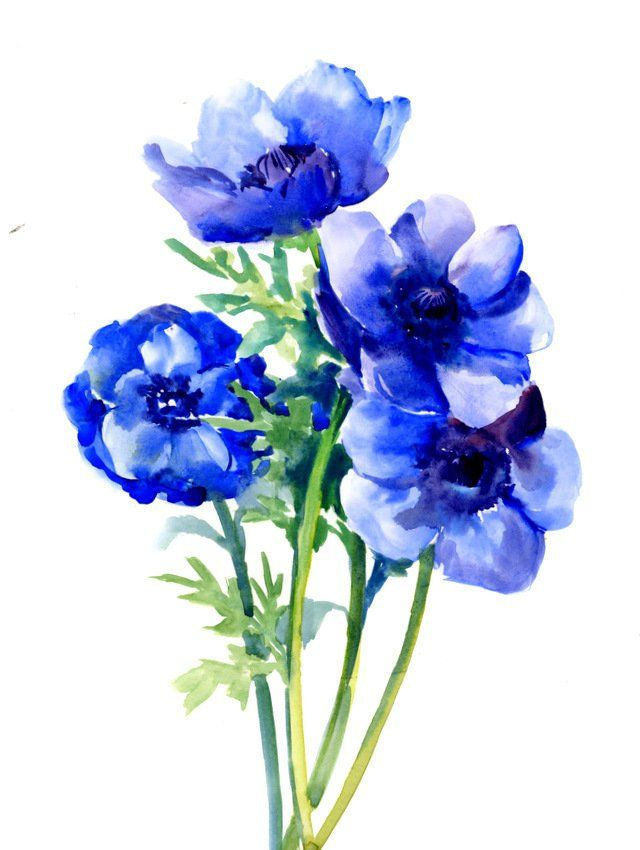 Blue Anemones Original Watercolor Painting 20 X 15 In Bright