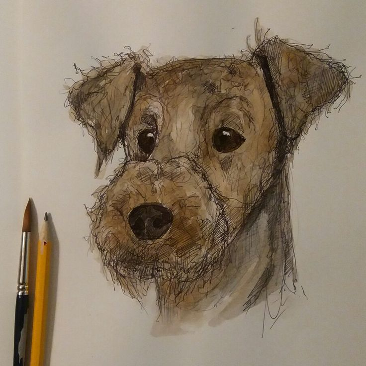 #irish terrier #watercolour