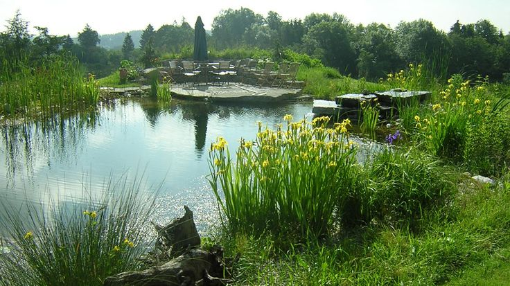 Natural Pools- An alternative to chlorine pools, the BioTop Natural Pools use plants to keep water clean and clear