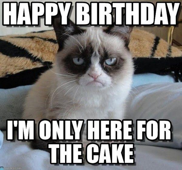 Funny Birthday Meme Cats : Best ideas about cat happy birthday meme on pinterest