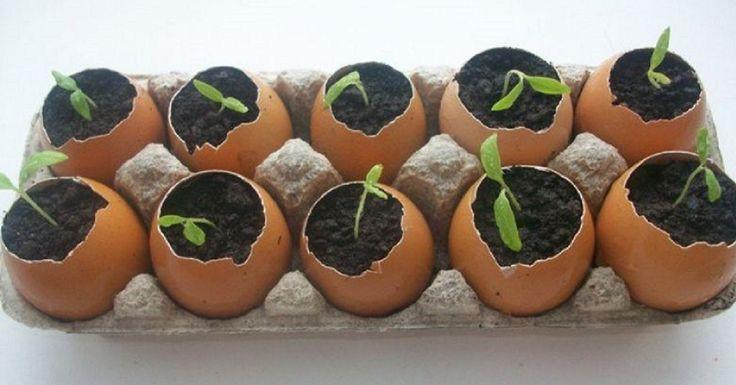 Лунный посевной календарь для богатого урожая!