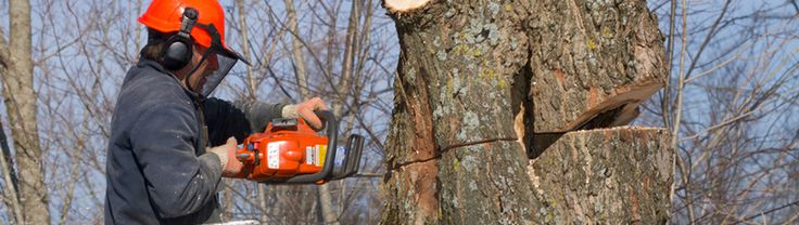 Tree Surgeons Billericay - Billericay tree surgeons, providing tree surgery services in Billiercay and throughout Essex.
