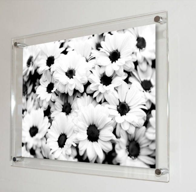 All Colours Acrylic Wall Mount Picture Photo Frame With Black White Daisy Image 12 X 8 12 X 16 16 X 24 Photo Mad Daisy Image All The Colors Photo Frame