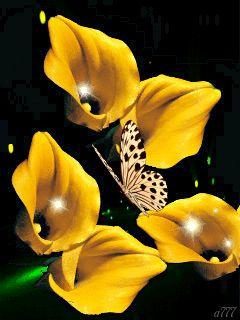Pinimg Gifs Butterfly | Жёлтые каллы | BUTTERFLY GIFS !!!!! | Pinterest