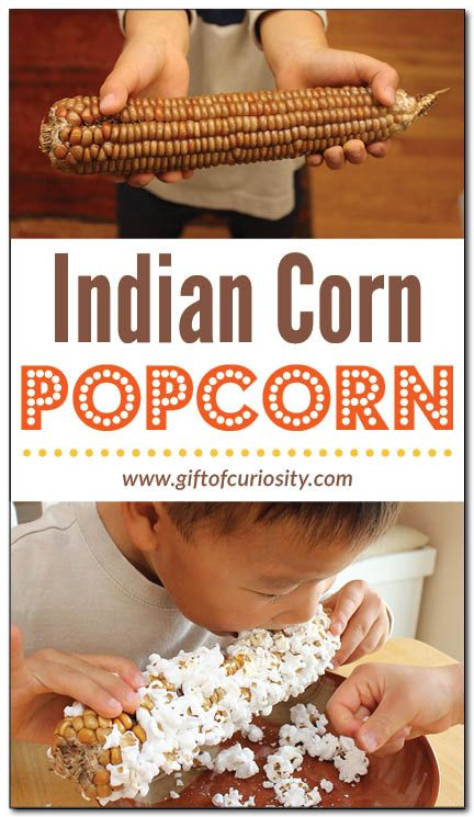 Amaze your kids by learning how to make popcorn from an ear of Indian corn right in your microwave. This brief tutorial will show you how to make this simple, healthy, and tasty fall snack. || Gift of Curiosity