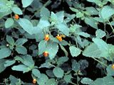 Best Ground cover plants for soggy areas of the yard