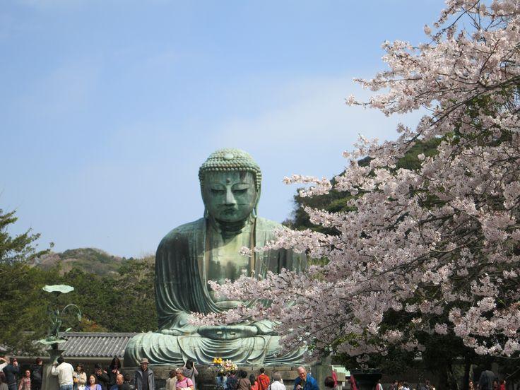#Daibutsu, il famoso #tempio del #Buddha gigante a #Kamakura Venite a vederlo con noi in #Giappone http://viaggigiappone.animeclick.it
