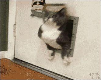 Fat Cat Stuck In Door. gif. more here http://artonsun.blogspot.com/2015/04/fat-cat-stuck-in-door-gif-more-here.html