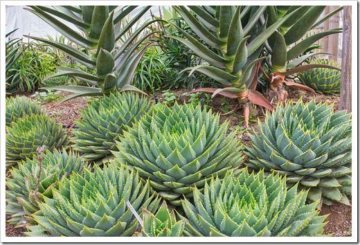 Succulents and More: Succulent porn