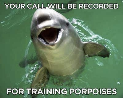 .Training Porpoi, Favorite Things, Hilarious Memes, Funny Pics, Funny Memes Pictures, Desks, Funny Stuff, Humor, Funny Animal