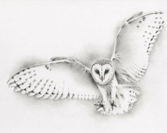 PRIX RÉDUIT. Original Flying Effraie des clochers de dessin - crayon et fusain - 11 « x 14 »