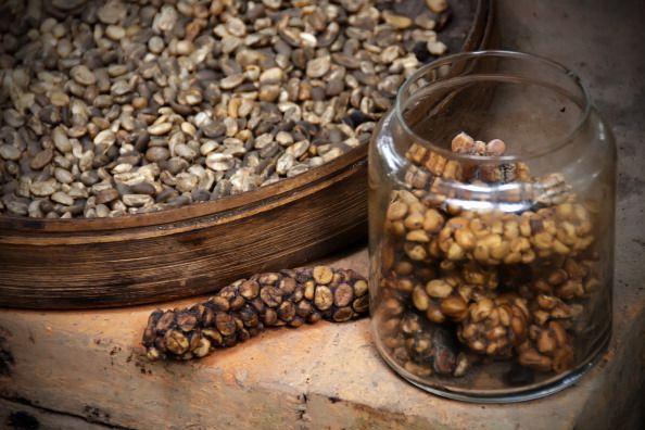 Kopi luwak or civet coffee, Indonesia