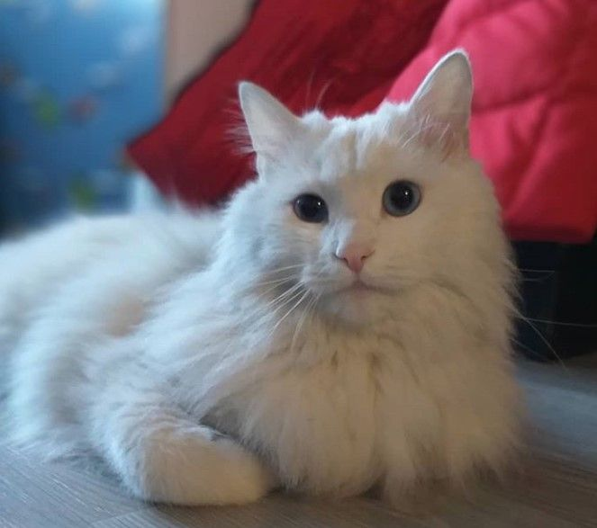 150 Best Names For White Cats White Cats Cats Cat Names
