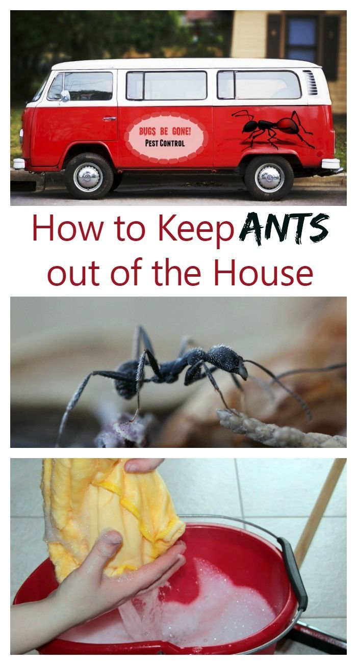 Tips and Tricks to keep Ants out of the house.