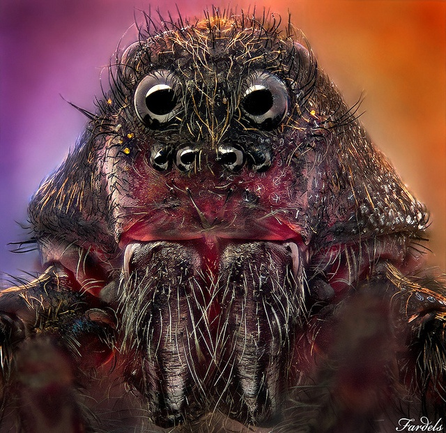 LORD VADER - WOLF SPIDER - [MACRO MONSTER] - 1x.com Published by jorge fardels