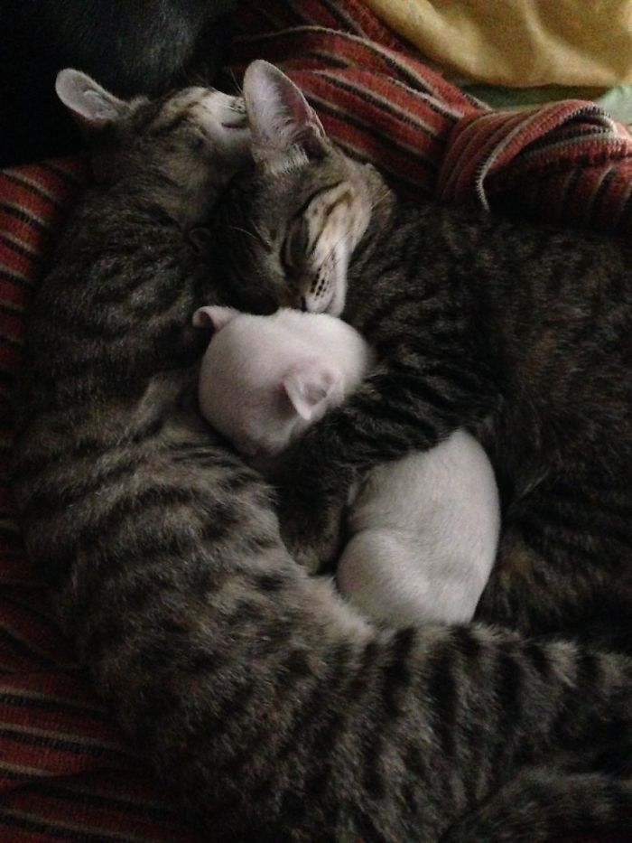 Des chats héroïques ont adopté un adorable chiot à 3 pattes que sa génitrice essayait de dévorer - Héros - Wamiz