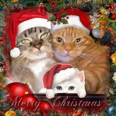 Image result for cat-mas