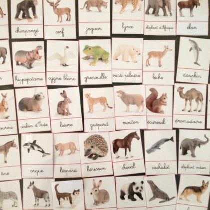 cartes de nomenclature animaux