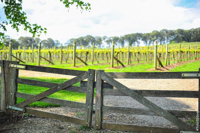 Wine regions and wineries near Sydney - Your Sydney Guide