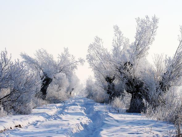 Żuławy zasypał śnieg. Droga polna w okolicach Malborka. Poland