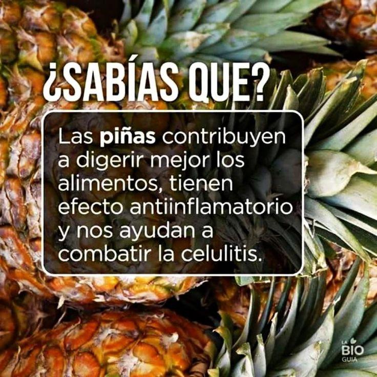 ★★★ Conoce Sabias Que Noticias, Sabias Que Higiene y Frida Kahlo Datos Curiosos aquí ➡➡ http://www.cienic.com/curiosidades-de-los-animales/