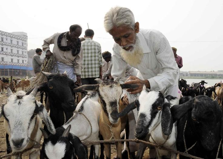 Bakri Id (Id Ul Zuha Celebration) Holy Festival Of Muslims In Goa India   Blogs of India-goahotels.com