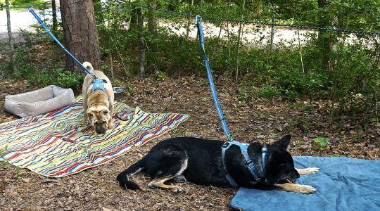 Крепление для поводка собак на открытой местности. Безопасность. между деревьями. Making a Zip Line for Your Dog