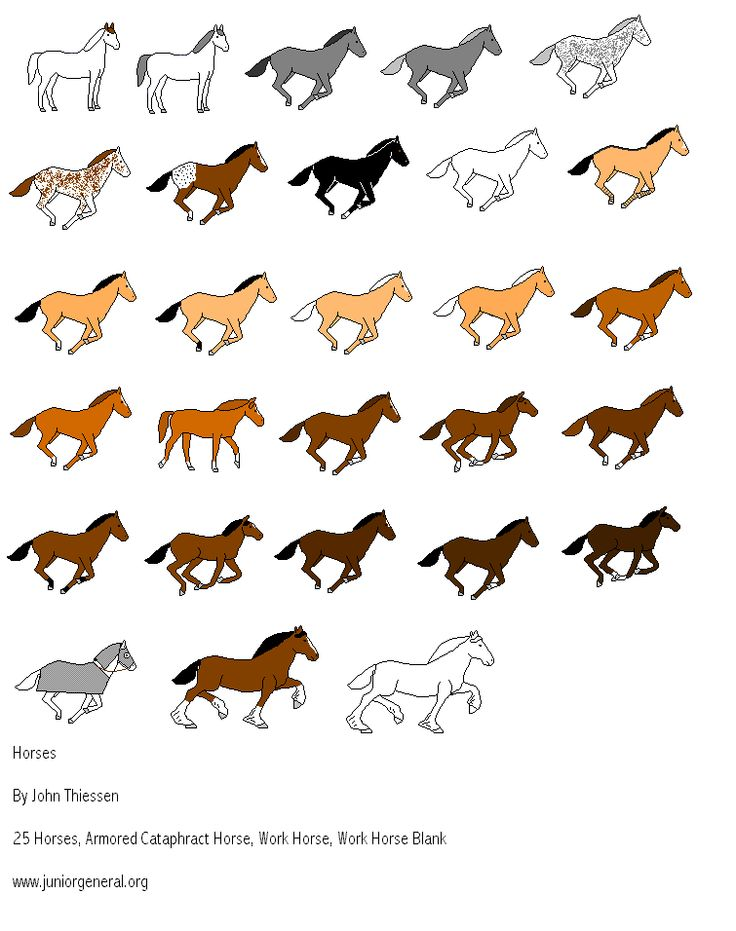 Horse coat colors and markings - photo#22