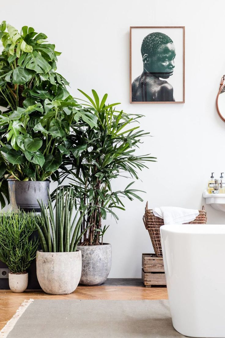 Decorate with a collection of indoor plants, art and natural baskets