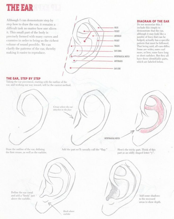 30 best anatomi kulaklaranatomy ears images on pinterest drawing ear tutorial obviously everybody does not have the exact same ear but this is the basic structure not the most fun or entertaining part to draw unless ccuart Choice Image
