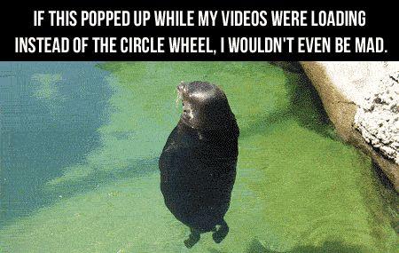 Funniest gif ever ...For more funny gifs visit www.bestfunnyjokes4u.com/