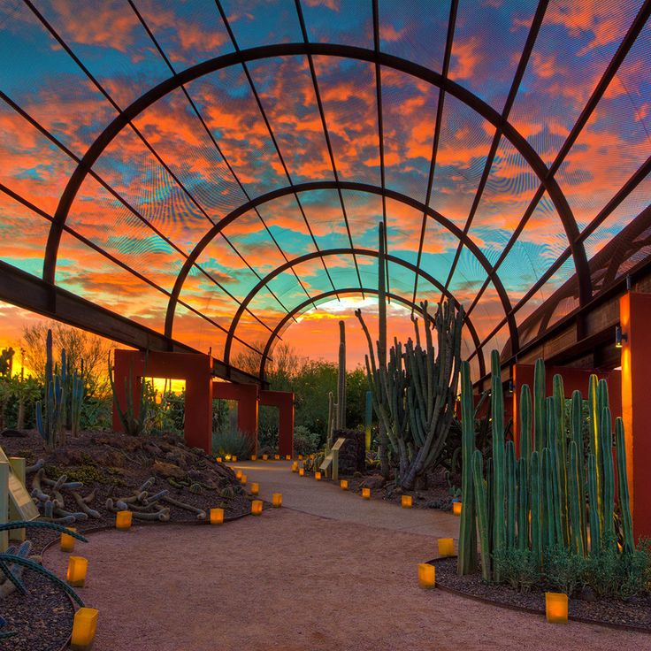 One of Arizona's greatest pleasures is sitting outside in evening and watching the sky transform from a brilliant blue to a Technicolor rainbow of bright yellows, hot pinks, and fiery reds and oranges. These psychedelic sunsets really are unlike any around the world thanks to the unique atmosphere of the desert. Arizona's arid climate causes airborne particles to scatter the setting sun's refracting light, producing saturated colors that diffuse and reflect off high clouds. The effects are…