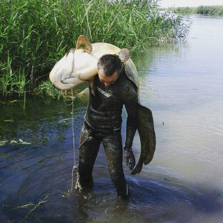 Фото от участника сообщества #Охотникикз  Константина Чукреева. Подводная охота в Алматинской области, Жидели. #подводнаяохота #сом #амур #белыйамур #охотникикз  #ohotnikikz