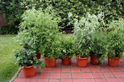 Pots are an ideal way of organizing your successive plantings. See the guide in this article