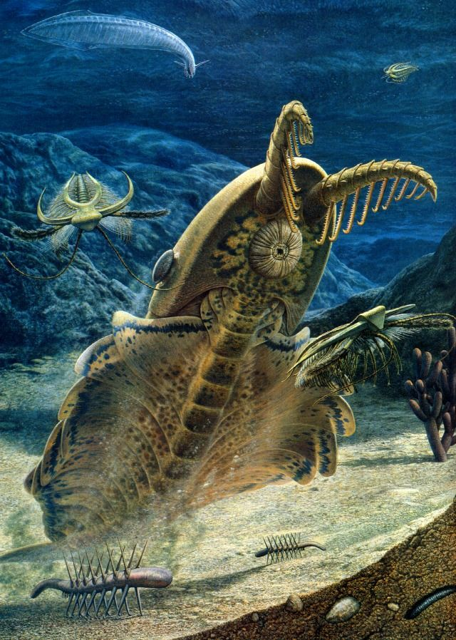 Anomalocarius: This was the apex predator of the Cambrian Seas. Nothing could stand up to one of these things, except for another Anomalocarius.