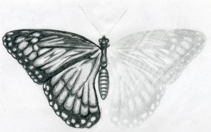 Easy to Draw Butterflies | The easiest way is to draw one with opened wings, so that you can ...