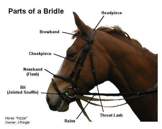 parts of a horse for kids - Google Search | horses ...