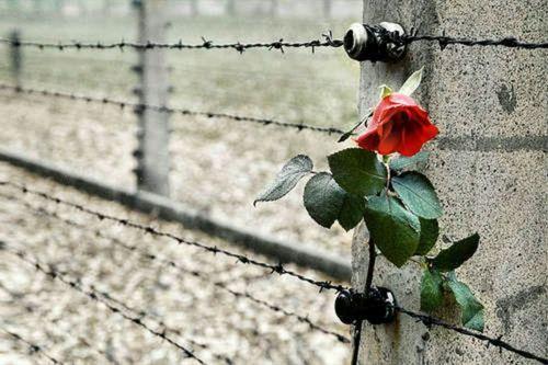 Giorno della memoria #Auschwitz