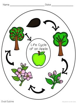 FREE Apple Life Cycle Graphic Organizer @Kristen S. for their science notebooks tomorrow? Check it out and print it if it's cool!